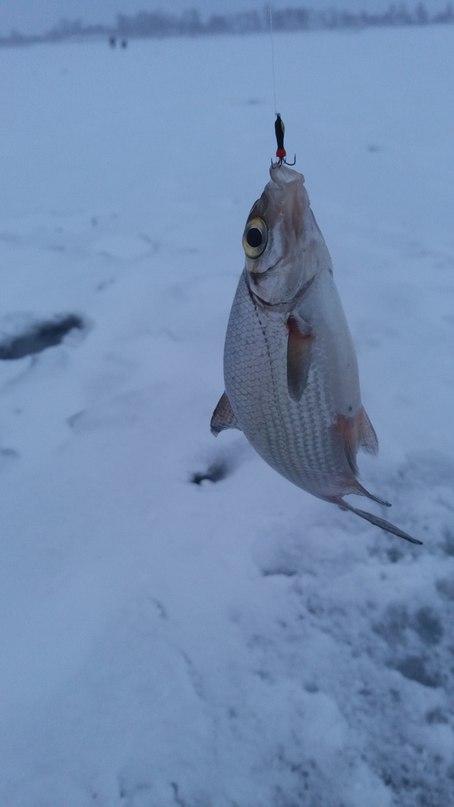 Нажмите на изображение для увеличения.  Название:Должа рыбка.jpg Просмотров:239 Размер:31.6 Кб ID:484369