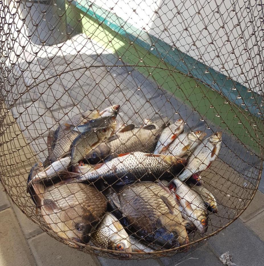 Нажмите на изображение для увеличения.  Название:рыбалка-щара-03-05-19.jpg Просмотров:373 Размер:199.9 Кб ID:615062