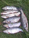 getImage (9)